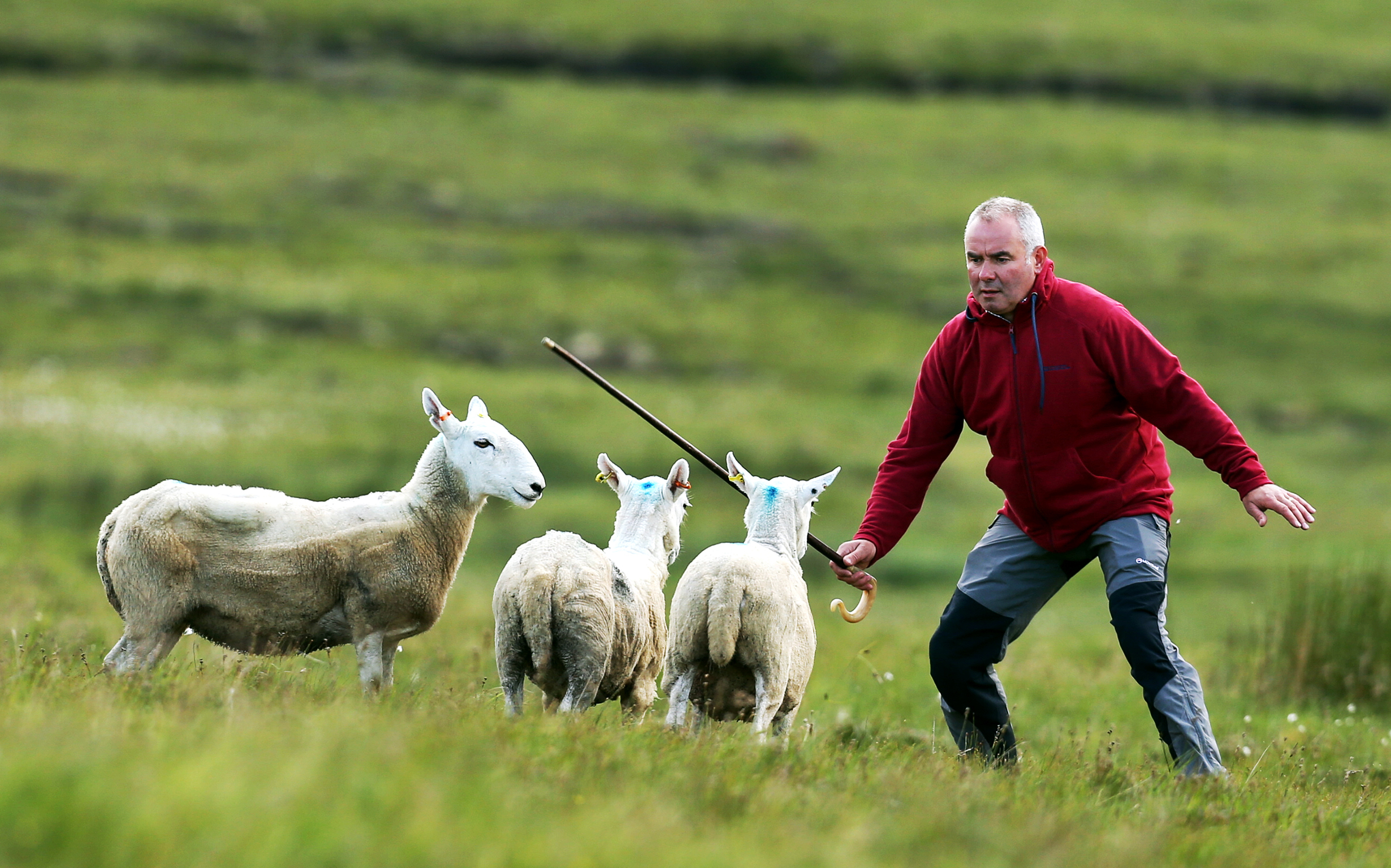 Ian MacDonald at last year's Staffin sheepdog trials
