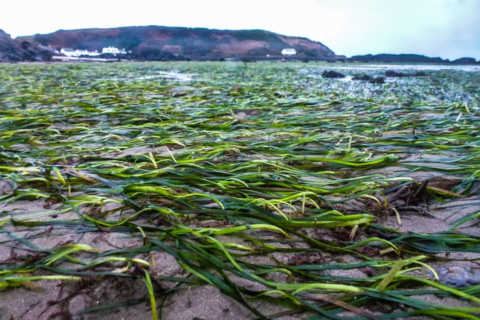 seagrass-2
